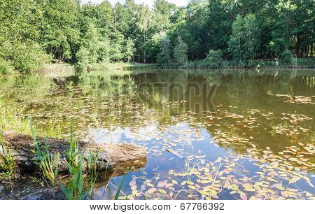 A Small Lake On A Windless Day In Summer