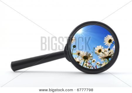 Magnifying Glass And Flower