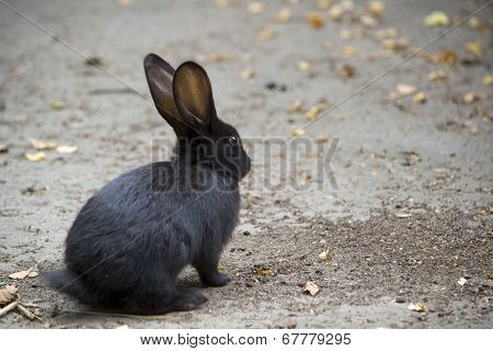Bunny On The Road