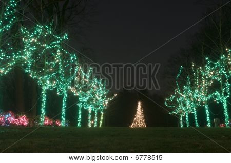 Row of Lit Trees