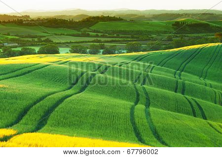 green wavy hills shined with a rising sun Tuscany