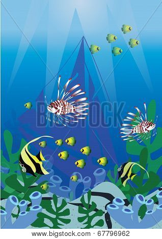 Marine life underwater  vector illustrations