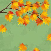 picture of maple tree  - Vintage autumn wallpaper with branch of maple tree leaf fall background - JPG