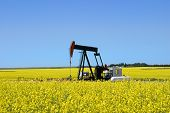 picture of nonrenewable  - A pump jack in a canola field in southern alberta - JPG