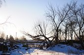 foto of paysage  - Winter village at sunset with trees - JPG