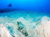 picture of discard  - A SCUBA diver looks toward a discarded glass bottle on a dead - JPG