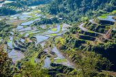 foto of ifugao  - the famous rice-terraces of Banaue Luzon Philippines