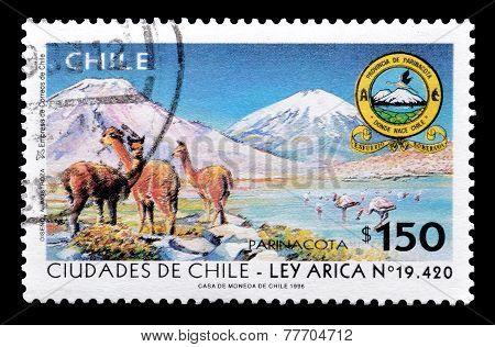 Chile 1996