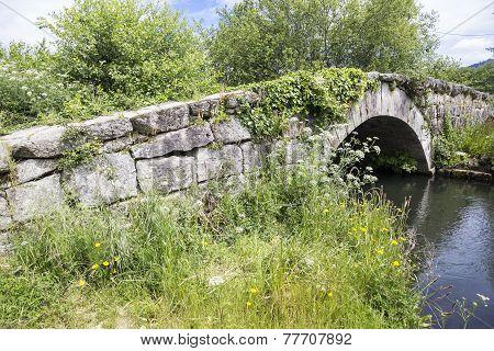 ancient small bridge over a verdant brook