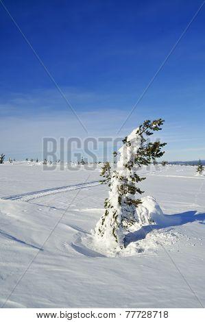Cross country ski hiking trail