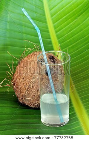Coconut and coconut milk.