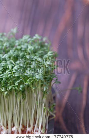 Green Watercress