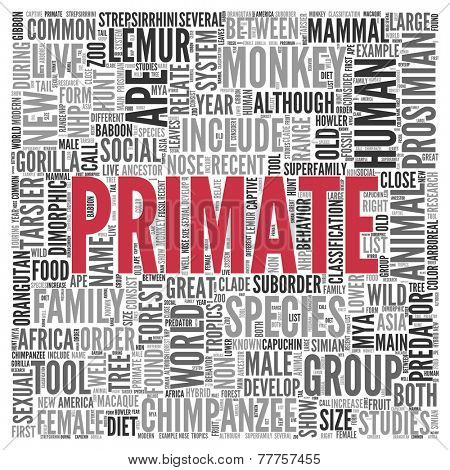 Close up Red PRIMATE Text at the Center of Word Tag Cloud on White Background.