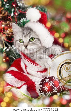 kitten in santa hat with red christmas decoration