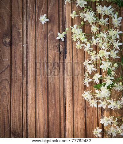 Evergreen Clematis (Clematis vitalba) known as Old Man's Beard or Traveler's Joy on wooden backgroun