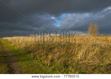 Deteriorating weather over a footpath along reed at fall