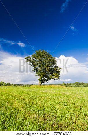 Plain Nature Field Landscape