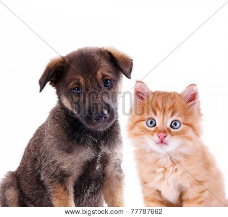 Funny puppy and little red kitten isolated on white