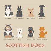 picture of shepherd dog  - Set of scottish dogs eps10 vector format - JPG