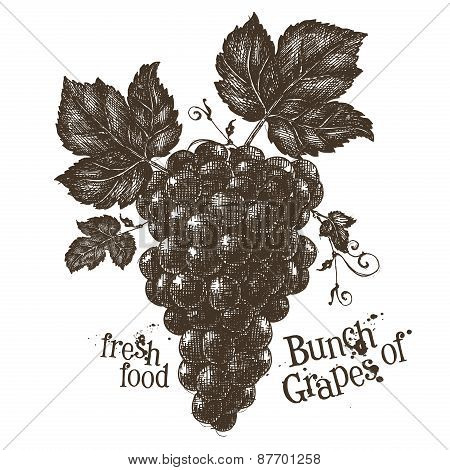 vine vector logo design template. grapevine or fresh food icon.