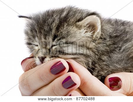Little Kitty Sleepping In The Human Hands