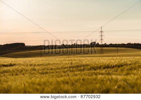 Cultivated land closeup