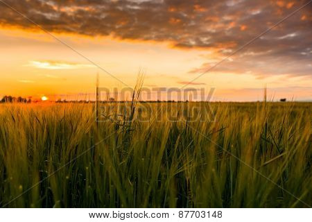 Cultivated land with cloudy sky