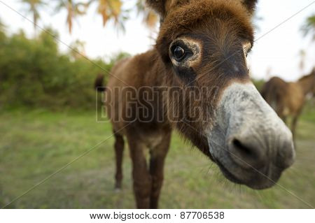 Baby Donkey Cute Face