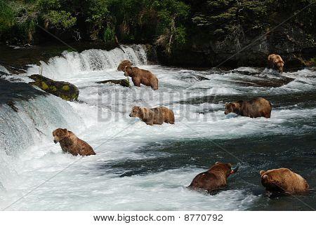 Bear Gathering