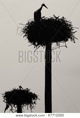 Two Levels Stork Nest
