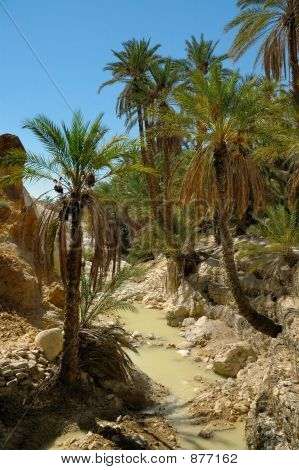 Palm Trees Over Small River In Desert Oasis