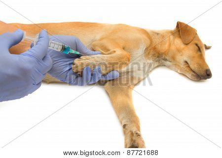 Vet Giving Injection The Dog