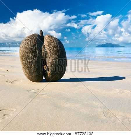 Sea's coconuts (coco de mer) on beach at Seychelles, Mahe