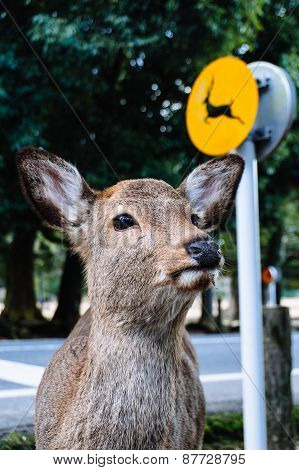 Deer with a sign