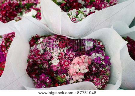 Dianthus Chinensis (china Pink)  In Flower Market, Thailand
