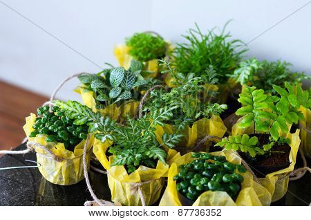 Outdoor Foliage Plant In Pots For Small Garden