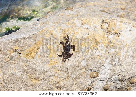 Little Crab on th rock
