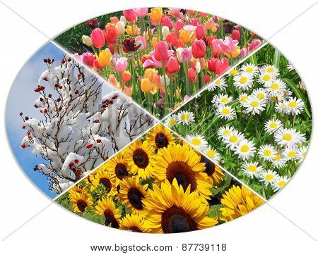 Four Seasons Circle Vi