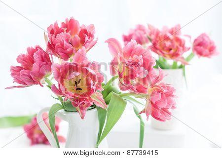 Beautiful pink double peony tulip