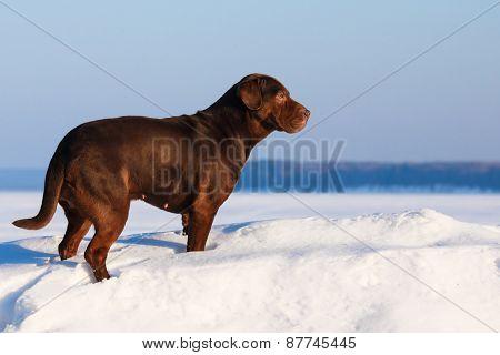 Dog At Sunny Day