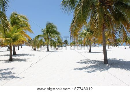 Beach On The Caribbean Sea, Cuba, Cayo Largo