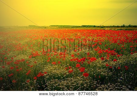 Landscape With Poppies And Chamomile In Sunset Light 2