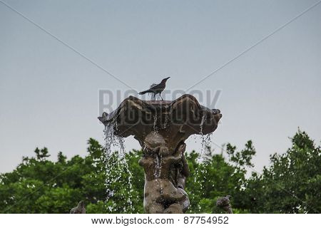Stone Fountain With Black Bird Upside