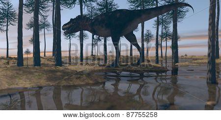 tarbosaurus walking on watered terrain in araucaria grove