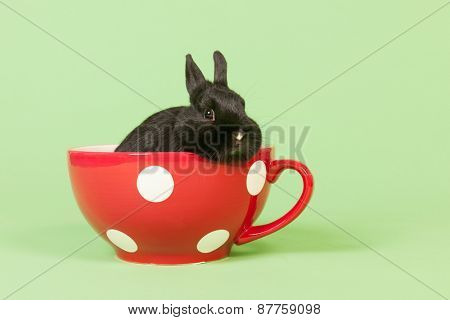 Black rabbit in funny red big cup