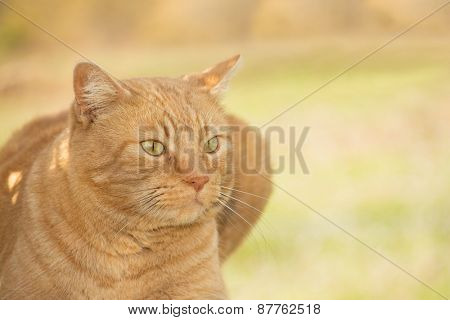 Portrait of a ginger tabby cat against spring green background