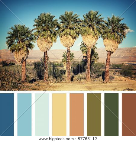 Palm trees in the desert, Nevada, USA. Instagram retro style processing, in a colour palette with complimentary colour swatches