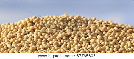 Soybean On Pile