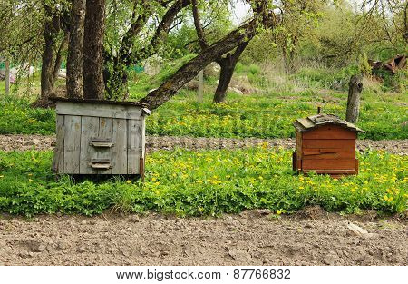 hives in the apiary