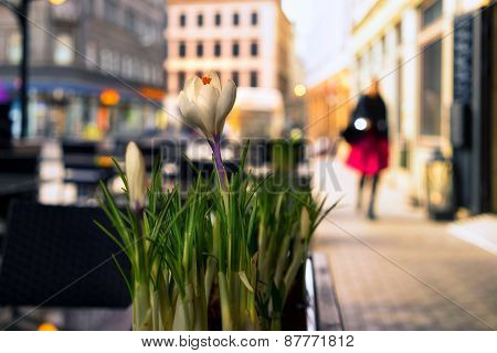 Girl Walking Down The Street Past The Spring Flowers In Cafe